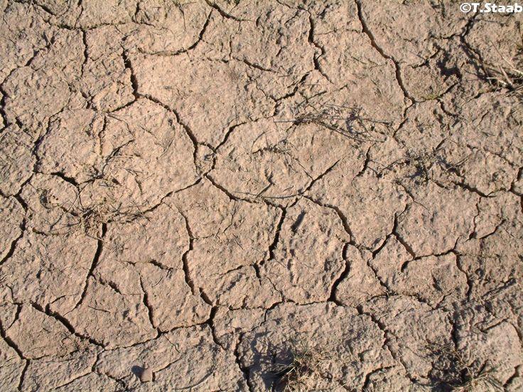 Hitzewellen schaden auch dem Igel - Was kann man tun?