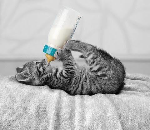 Kitty holding a bottle
