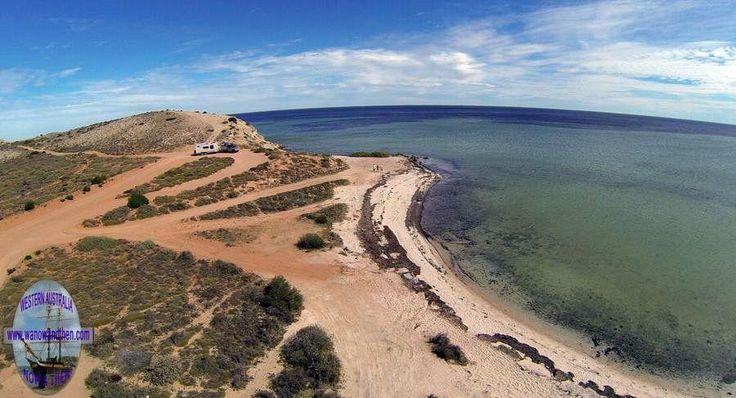 Whalebone - Shark Bay
