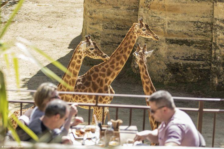 """Lors de votre visite, profitez d'une pause déjeuner sur la terrasse du restaurant """"Le Camp des girafes"""" !"""