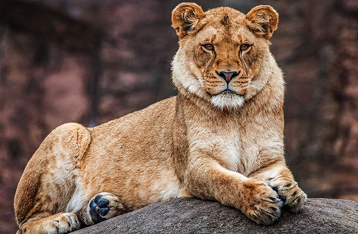 Lincoln Park Zoo is open 365 and free.