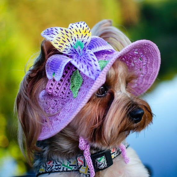 Hat For Dog Alstroemeria Pet Beanie Sun Hat For Dog Cap For Dog Summer Dog Hat Flower Dog Hat Crocheted Dog Hats Pet Photo Prop Dog