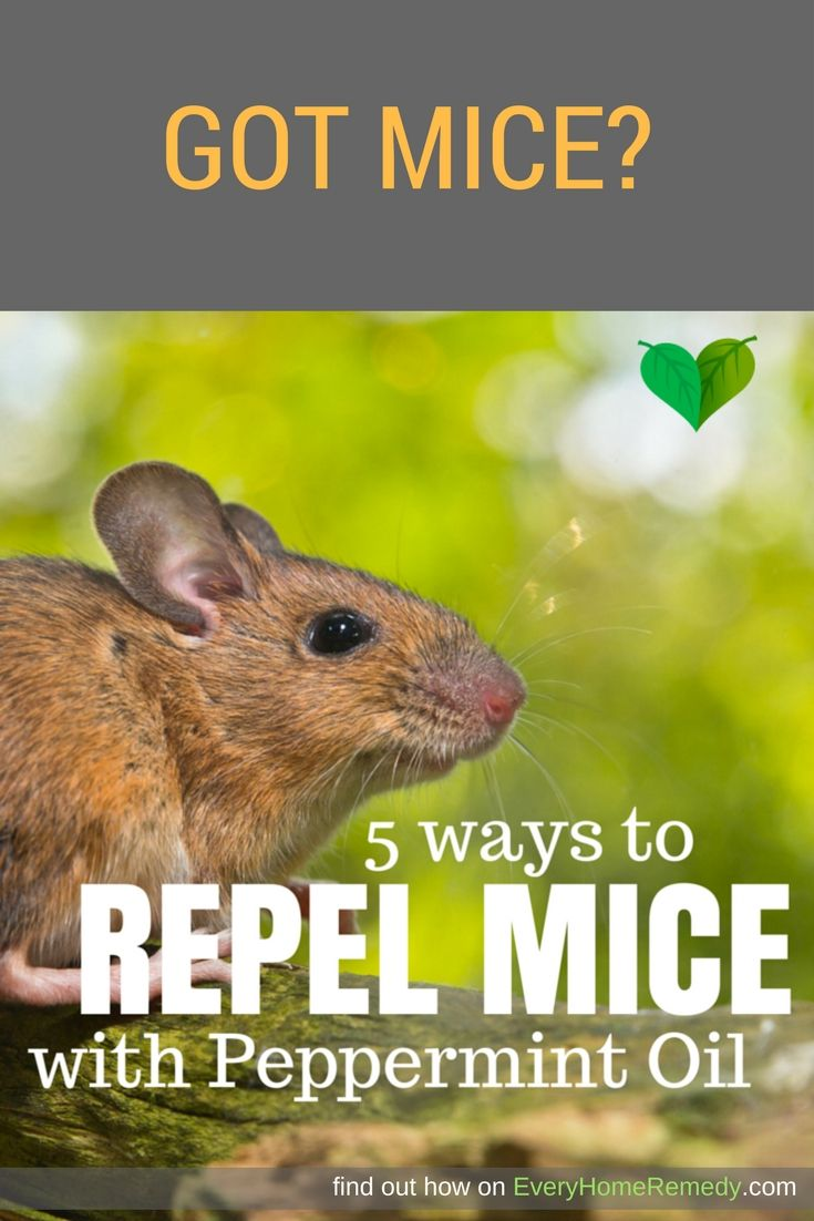 Best 25 Mice Repellent Ideas On Pinterest Diy Mice Repellent Mice Control And Getting Rid Of