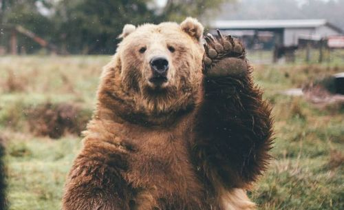 fridaybear:  Hello friends. It is FRIDAY.WHICH MEANS TOMORROW...