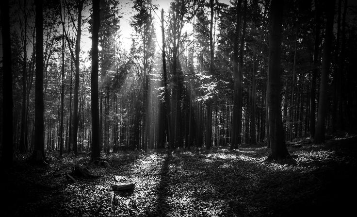Light between trees by Michal Vávra on 500px