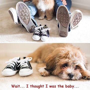 Dog announcement