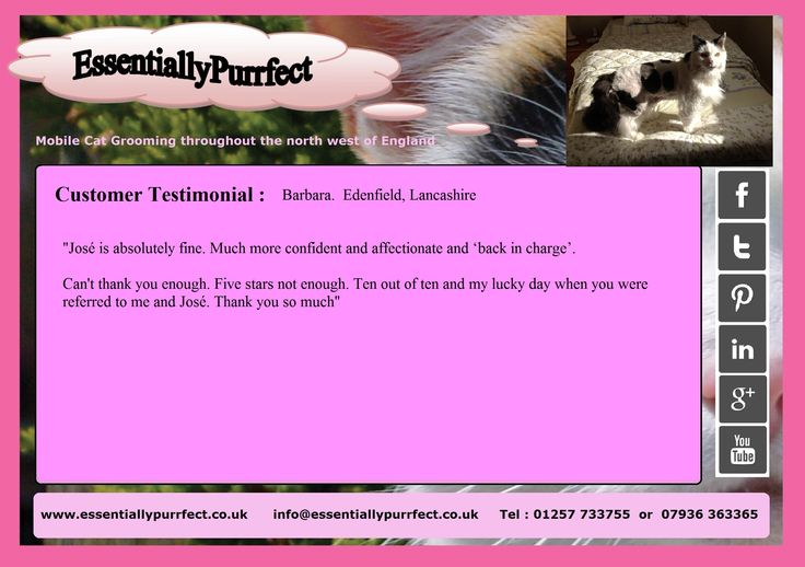 Customer Testimonial of EssentiallyPurrfect #mobile #catgrooming service.  Barbara #Enenfield #Lancashire