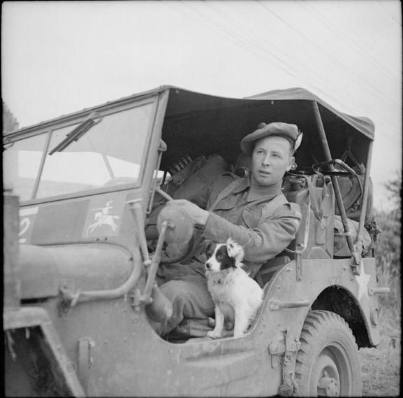THE BRITISH ARMY IN NORMANDY -- Driver and mechanic George Couser of the 91st Anti-Tank Regiment in a Willys MB Jeep 4x4 with a pet dog in Tessel-Bretteville: June 30, 1944.