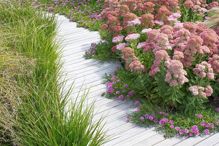 Franchesca Watson   Garden Designer  Decking with ornamental grasses, Mesembryanthemum and Sedum spectabile.
