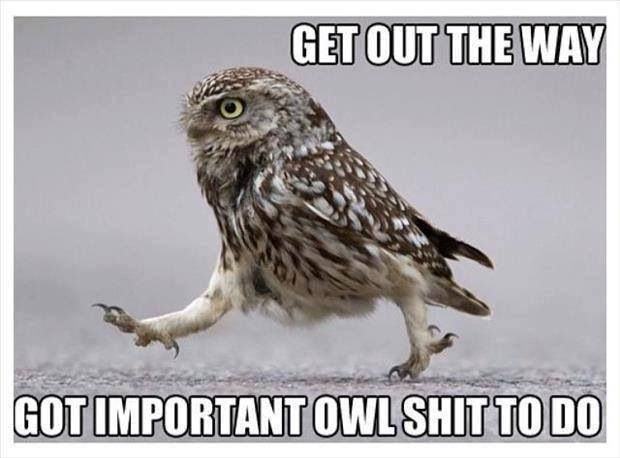 Owls. They do what they want
