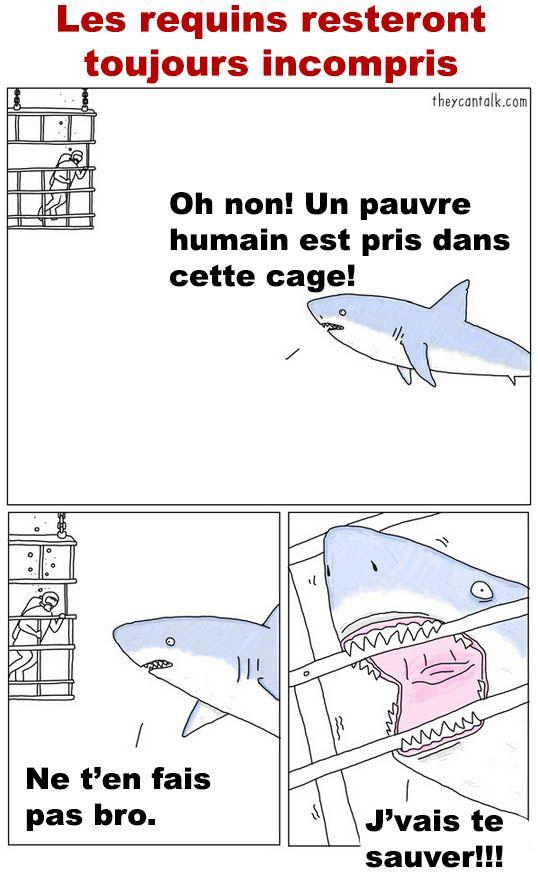 Les requins resteront toujours mal compris