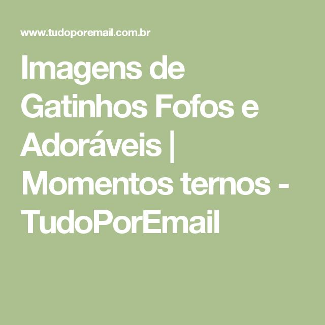 Imagens de Gatinhos Fofos e Adoráveis | Momentos ternos - TudoPorEmail