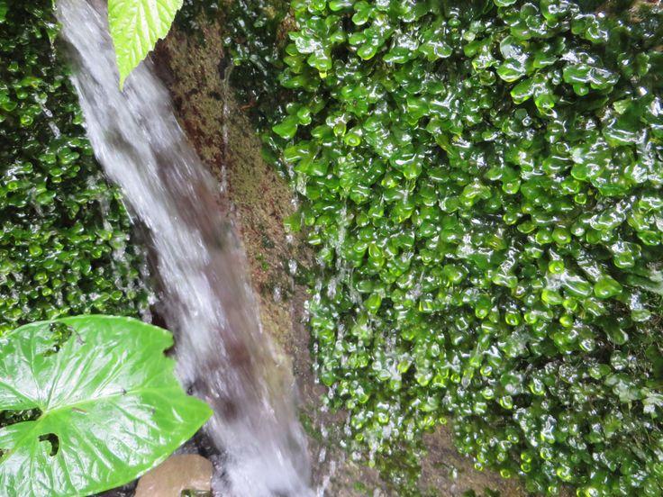 nacimiento de agua