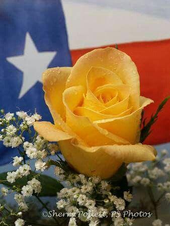 Yellow Rose of Texas!!
