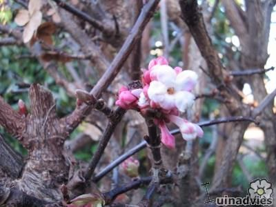 Sierheesters bloei november | soorten bloeiende struiken in het najaar