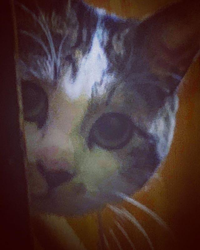 ちらり #猫 #ねこ部 #ねこら部 #ペコねこ部 #ねこ好き #ねこもふ団 #ねこばか #ねこちゃん #ねこさん#ねこらぶ #ネコ #ネコ部 #猫好き#愛猫#むぎ#ねこすたぐらむ#にゃんすたぐらむ#猫のいる暮らし#猫との暮らし#ちらり#覗き見#cat #instacat #catstagram #ilovemycat #instagramcats #meow #pet #petstagram #cutepets