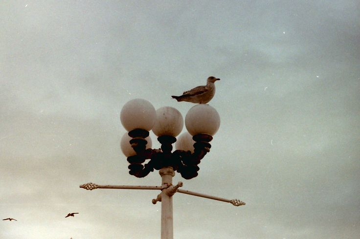 Lonely bird at Brighton (UK) - Analog Canon T50