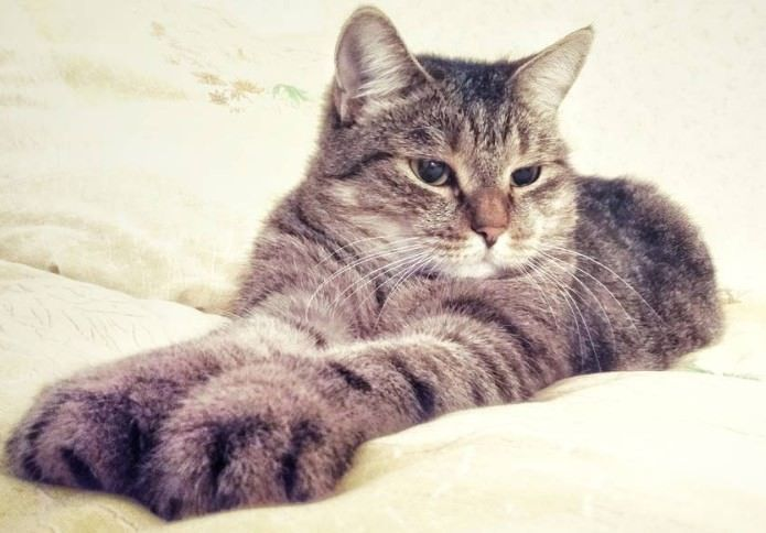 70 Southern Cat Names | Cat Names | Cat names, Cats, Animals