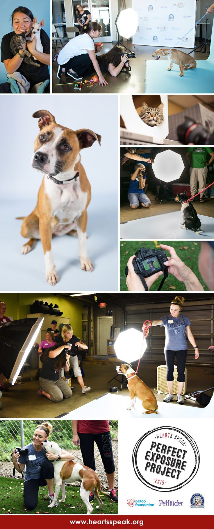 Through the Perfect Exposure Project, HeARTs Speak brings professional camera and studio lighting equipment to high-intake shelters around the USA, and provides workshops on how to use it effectively.  A professional photo can catch the eye of an adopter, and save the life of a homeless pet!