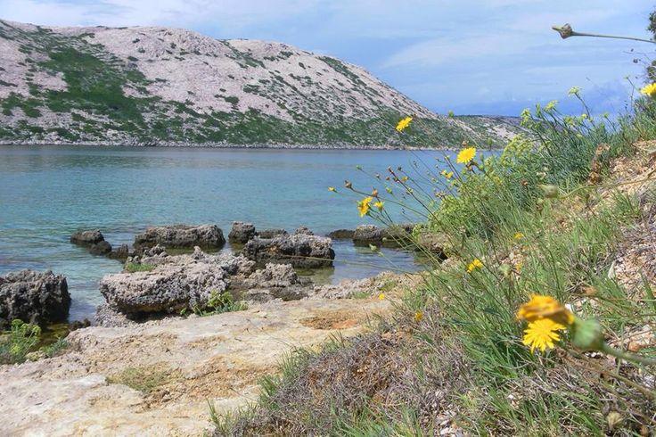 Spiaggia Pudarica ~ Isola di Rab (Arbe) , Croazia, Foto di Mara Vezzola