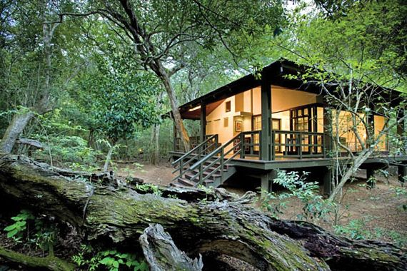 The epic Phinda Forest Lodge in KwaZulu-Natal South Africa
