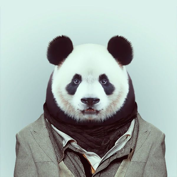 Yago Partal: Zoo Portraits - what a fun zoo party decor idea!
