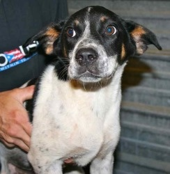 Mixed Batch is an adoptable Terrier Dog in Chipley, FL