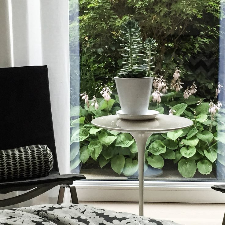 My small lovely tulip table