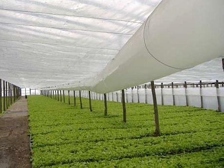 Folie termica solar cu antipicurare pentu asigurarea unui climat optim Folie Solar