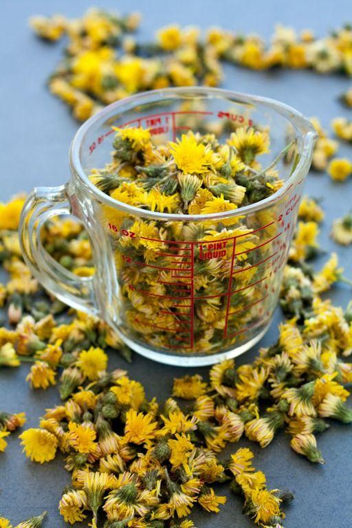 Dandelion Cordial (recipe)