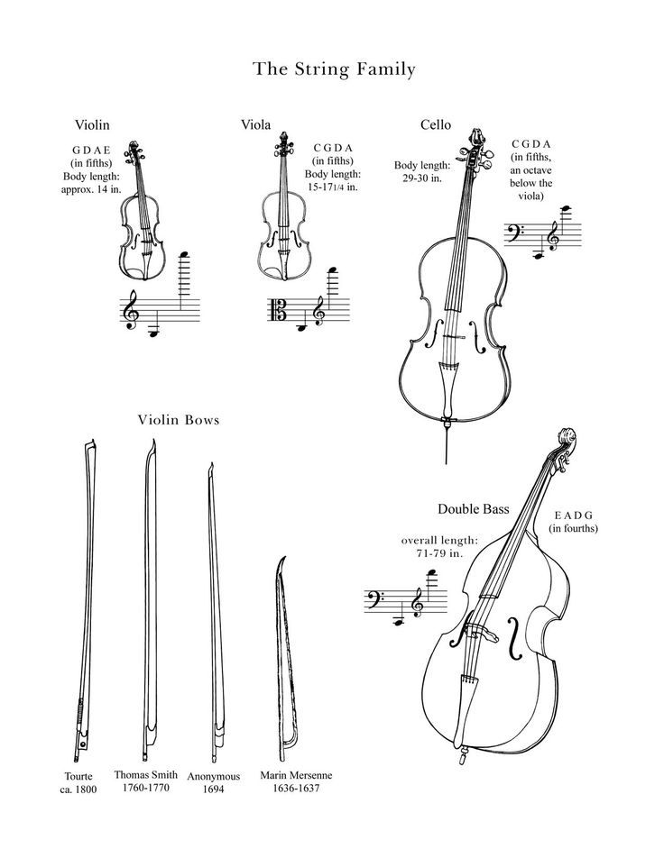 """The String Family"" : Drawings of instruments in the string family from the Lancaster Symphony"