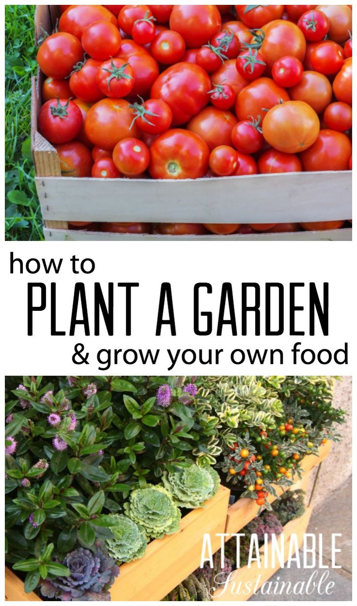 Plant a vegetable garden. Grow your own food for food security. Homestead ~ Prepping ~ self-reliance ~ sustainability