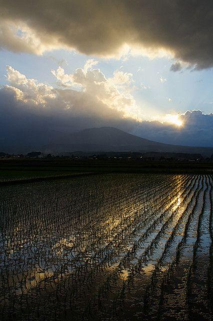 Where Heaven and Rice Fields meet, Iwate, Japan.