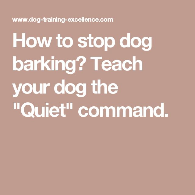 "How to stop dog barking? Teach your dog the ""Quiet"" command. Pet Accessories, Dog Toys, Cat Toys, Pet Tricks"