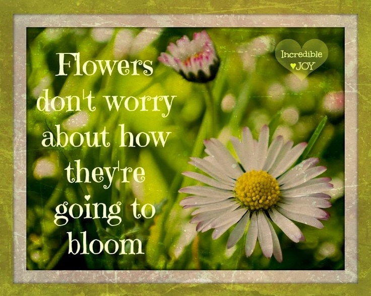 Flowers Quote Via Www.Facebook.com/IncredibleJoy