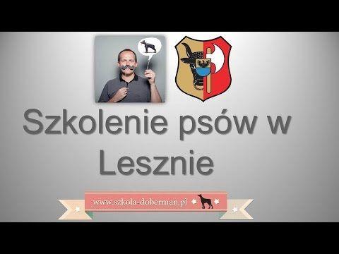 Szkolenie psów Leszno - bardzo skuteczna tresura psa w Lesznie - Szkoła dla psów LEsznie.