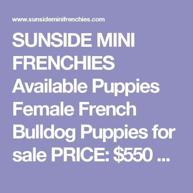 SUNSIDE MINI FRENCHIES Available Puppies Female French Bulldog Puppiesfor sale    PRICE:$550 USD  !!! EMAIL US NOW !!!  NAME:Brenda  Breed:French Bulldog  Size:Mini/Teacup  Sex:Female  Age:11 weeks  Color:White  Shipping:Available (USA / Canada)  She is just as cute as you can get. Super tiny size 1.8 pounds now and estimating under 12 to 14 pounds. So playful, so sweet and very lovable. She is just the greatest, friendliest pup and would be PERFECT for any family to travel with…