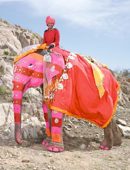 The stars of #Jaipur's elephant festival photographed by Charles Fréger