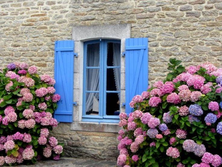 Гортензия крупнолистная - символ Бретани. Франция. Обсуждение на LiveInternet - Российский Сервис Онлайн-Дневников