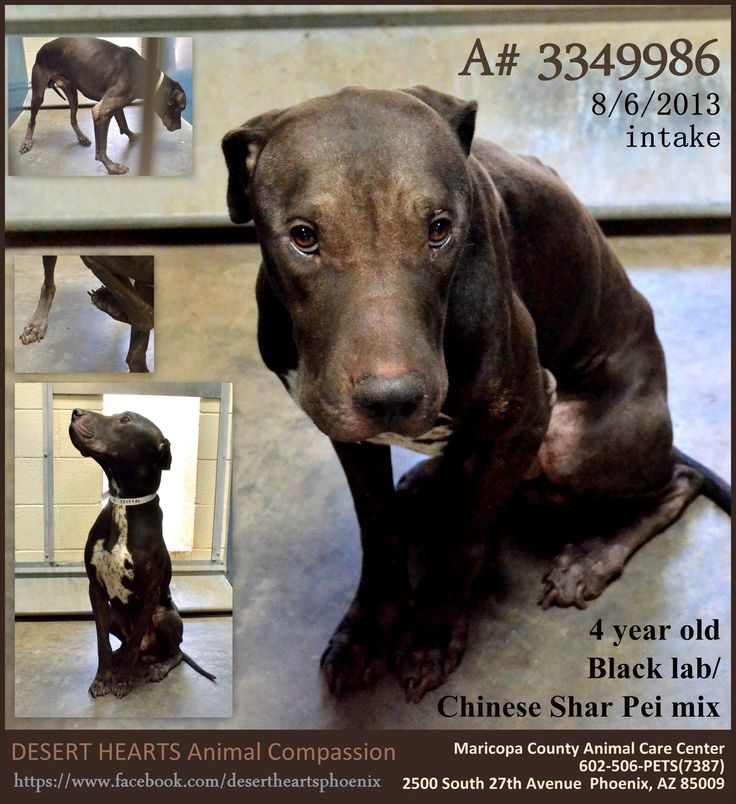 Featured Dog 8 8 2013 Status Rest In Peace Desert Hearts Animal Compassion Www Facebook Com Desertheartsphoenix Save Animals Animals Pets