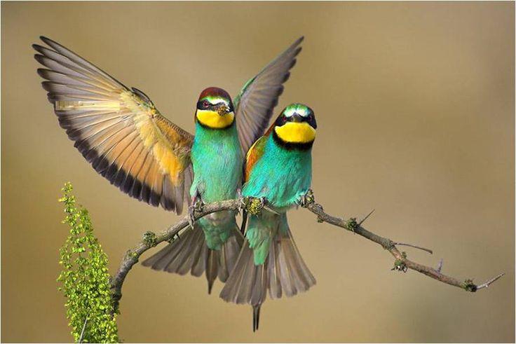 Prachtige vogels