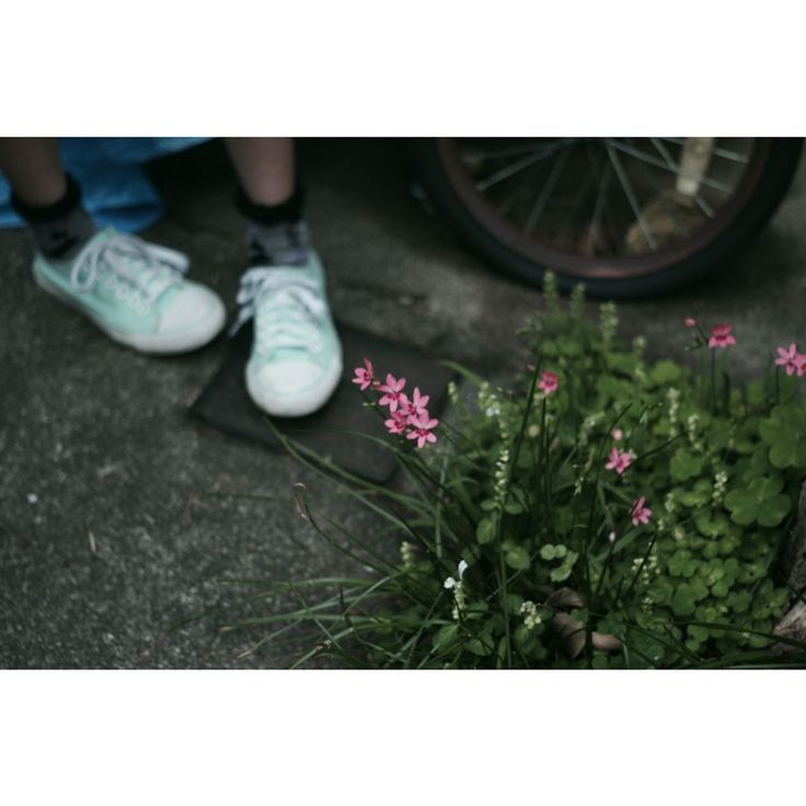 ❁˟*❁⃝͙*˟❁ ❁˟*❁⃝͙*˟❁ ❁˟*❁⃝͙*˟❁ ❁˟*❁⃝͙*˟❁ ⁑ ⁑ 姫のあんよと姫檜扇。 ⁑ ⁑ #姪#姪っ子#花#姫檜扇#ヒメヒオウギ#オールドレンズ#タクマー#アサヒペンタックス#単焦点#おはようございます#flower#flowers#flowerslovers#flowerstagram#floweroftheday#flower#oldlens#takumar#asahipentax#55mm#おはようございます http://gelinshop.com/ipost/1514828122159335316/?code=BUFwCa1FEeU
