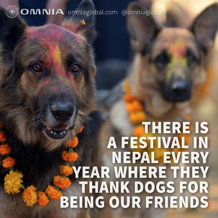 """What a great tradition! At OMNIA, dogs have a special place in our hearts - we even have an office dog, Oscar  Next year in October, we, too, will be celebrating dogs at """"Kukur Tihar"""" - a special day dedicated to celebrate dogs!"""