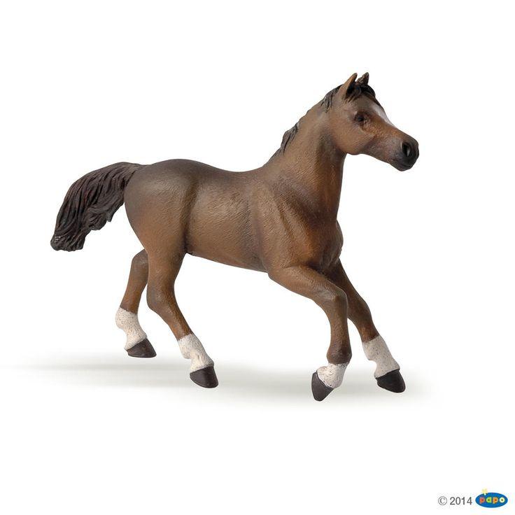 #transformer PAPO Arabian Horse / Anglo Arab Mare