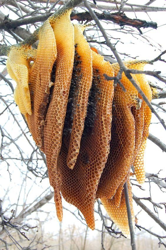 Beehive formation