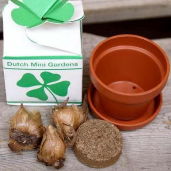 Avec ce petit kit de trèfles à 4 feuilles, faites pousser vous-même jusqu'à 3 véritables trèfles à quatre feuilles en pot, et peut-être vous porteront-ils chance ! ☘️ #clover #chance #lucky #trefle #4feuilles #shamrock #irelande #4leaf #4leafclover #clovers