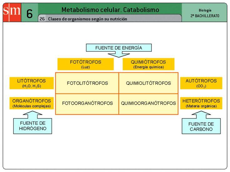 Metabolismo de los seres vivos