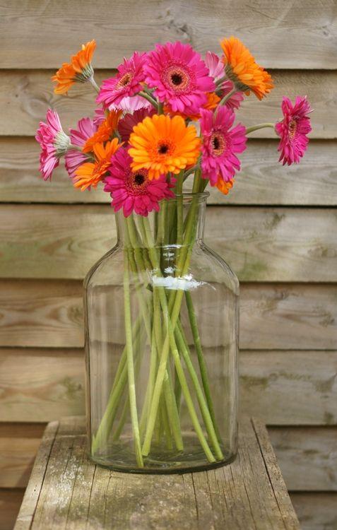 "I added ""it's me!: {FLOWER FRIDAY} Gewagte Kombination"" to an #inlinkz linkup!http://einwenighiervonunddavon.blogspot.de/2015/05/flower-friday-gerbera.html"