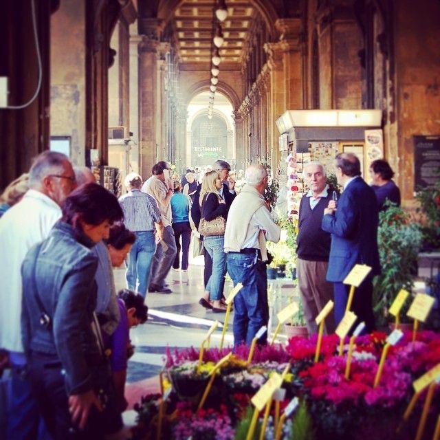 Thursday flower market, Piazza Repubblica #fiori...