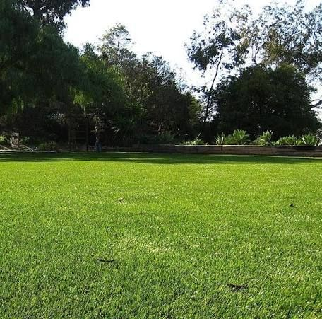 Best Grasses For Austin Yards In 2019 Artificial Turf Types
